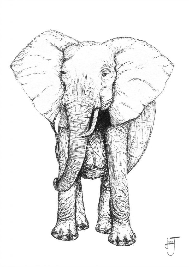 Elephant pen drawing
